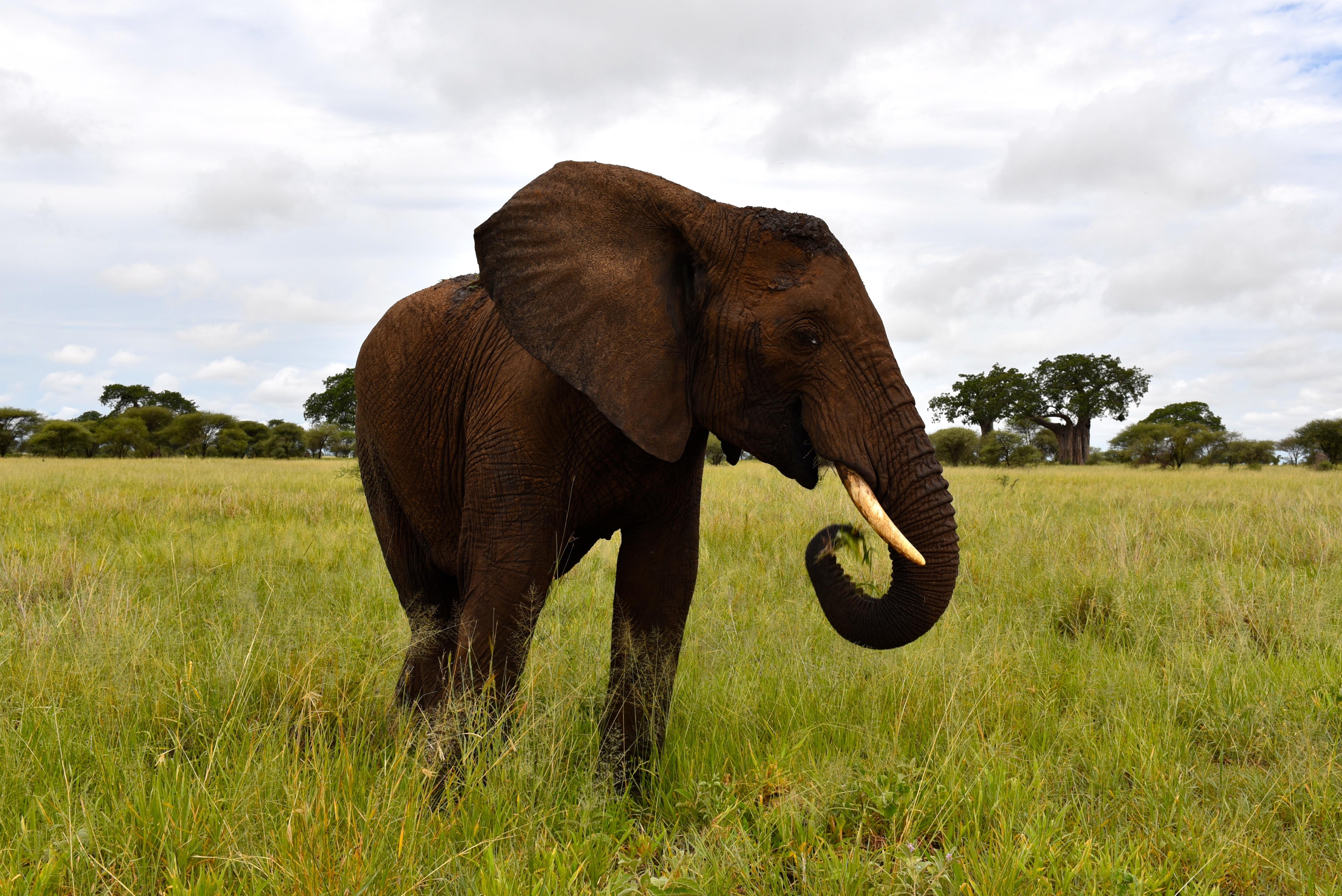 elephant best